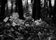 in the woods / im wal da isses kalt